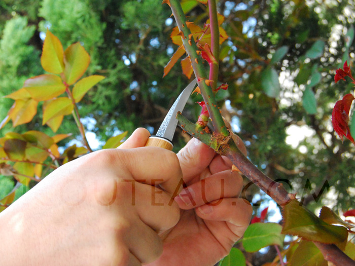 Japanese grafting knife